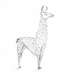 cropped-llama.jpg
